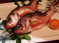 季節魚 メバル